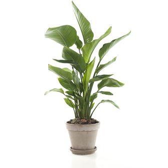 planten werkplek