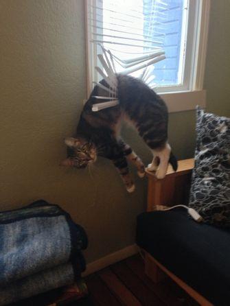 kat zit vast