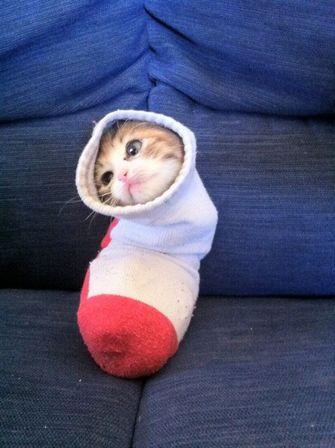 kat zit vast in sok