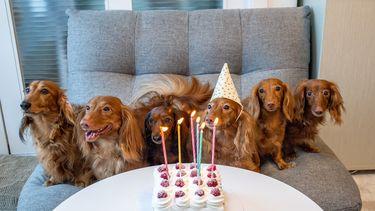 hondjes die jarig zijn met een verjaardagtaart