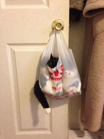 kat zit vast in plastic zak