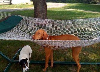 hond zit vast in hangmat