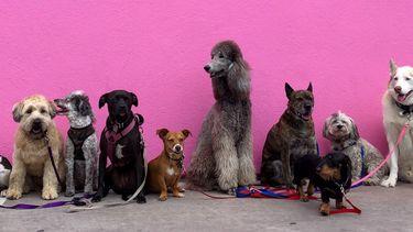 honden irritaties