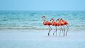 Chief Flamingo Officer