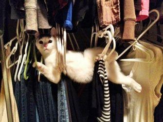 kat zit vast in kledinghangers