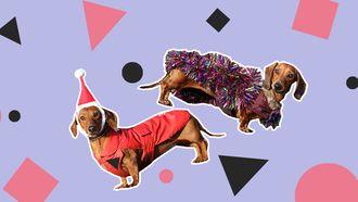 honden kerstoutfits londen