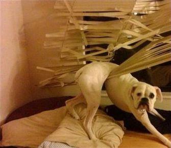 hond zit vast
