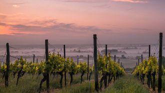 Foto van een wijngaarde met zonsondergang