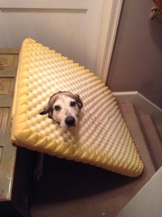 hond zit vast in schuimrubber