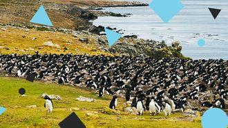 eiland kopen pinguins
