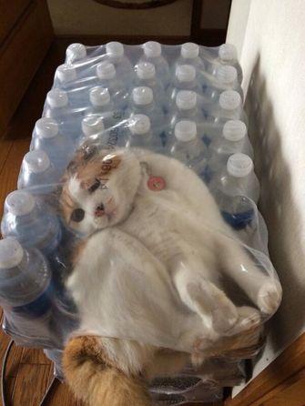 kat zit vast tussen waterflesjes