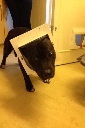 hond zit vast in kattenluikje