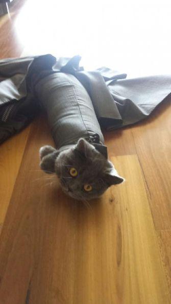 kat zit vast in mouw