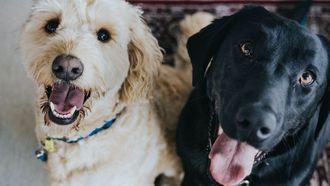 honden (huisdieren celebrities)