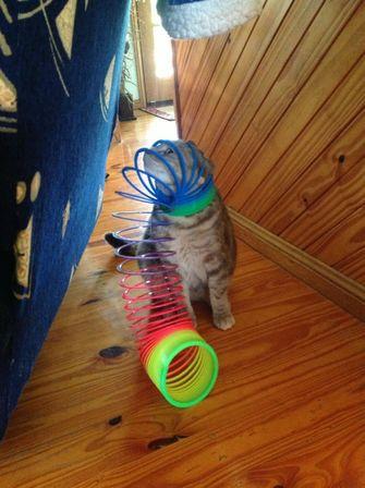 kat zit vast in speelgoed